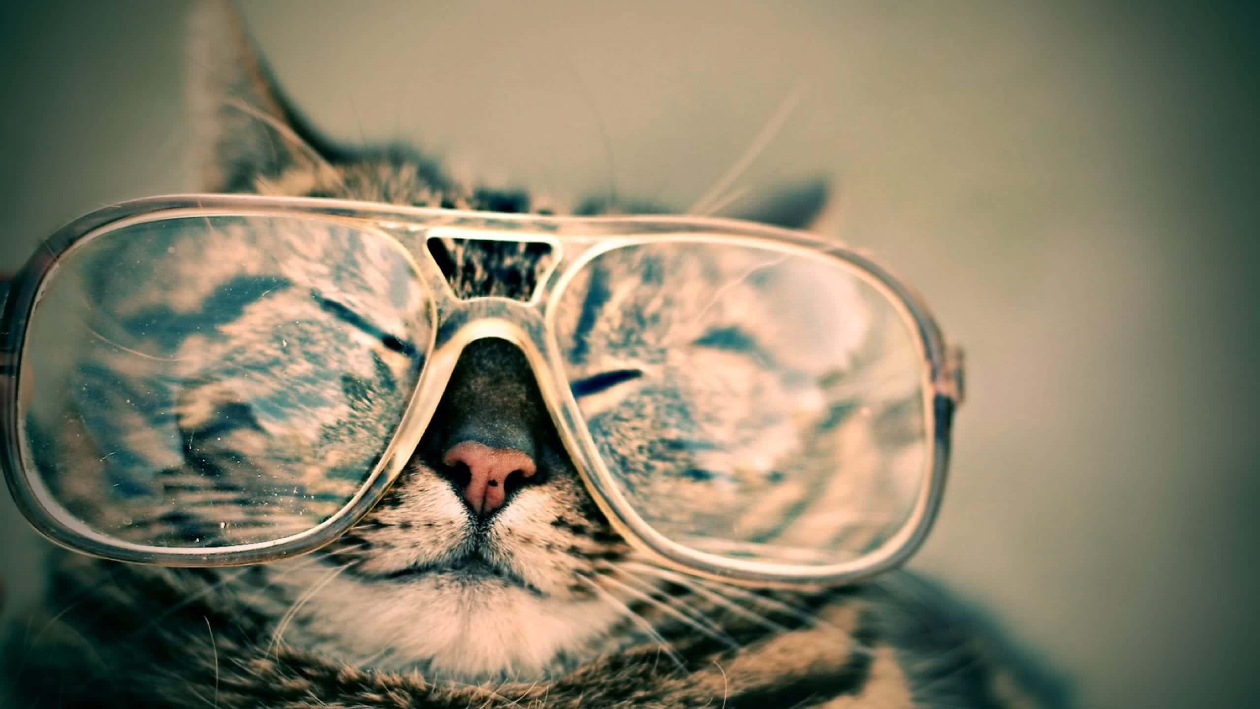 Gato con gafas durmiendo
