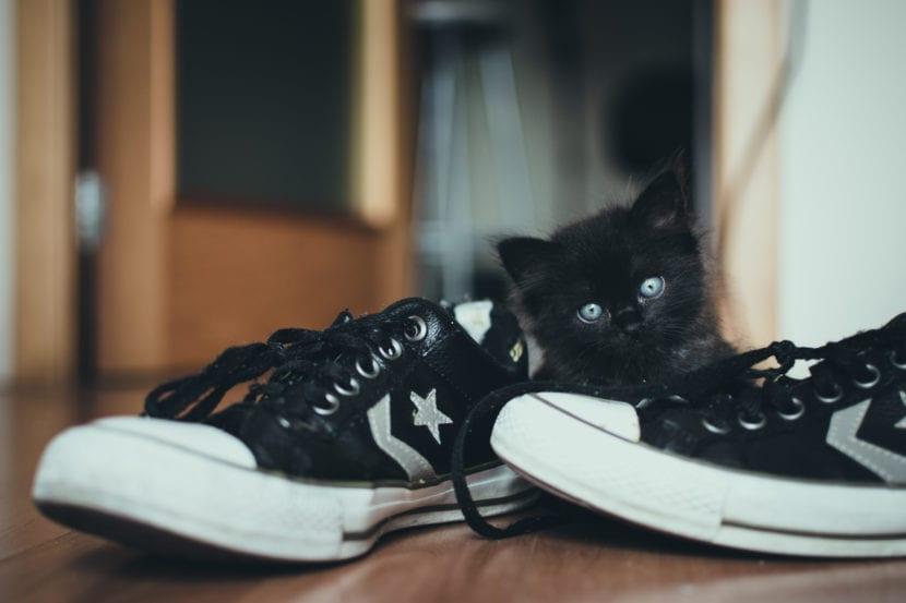 Gato jugando con zapatos