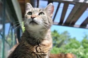 Gato en la terraza