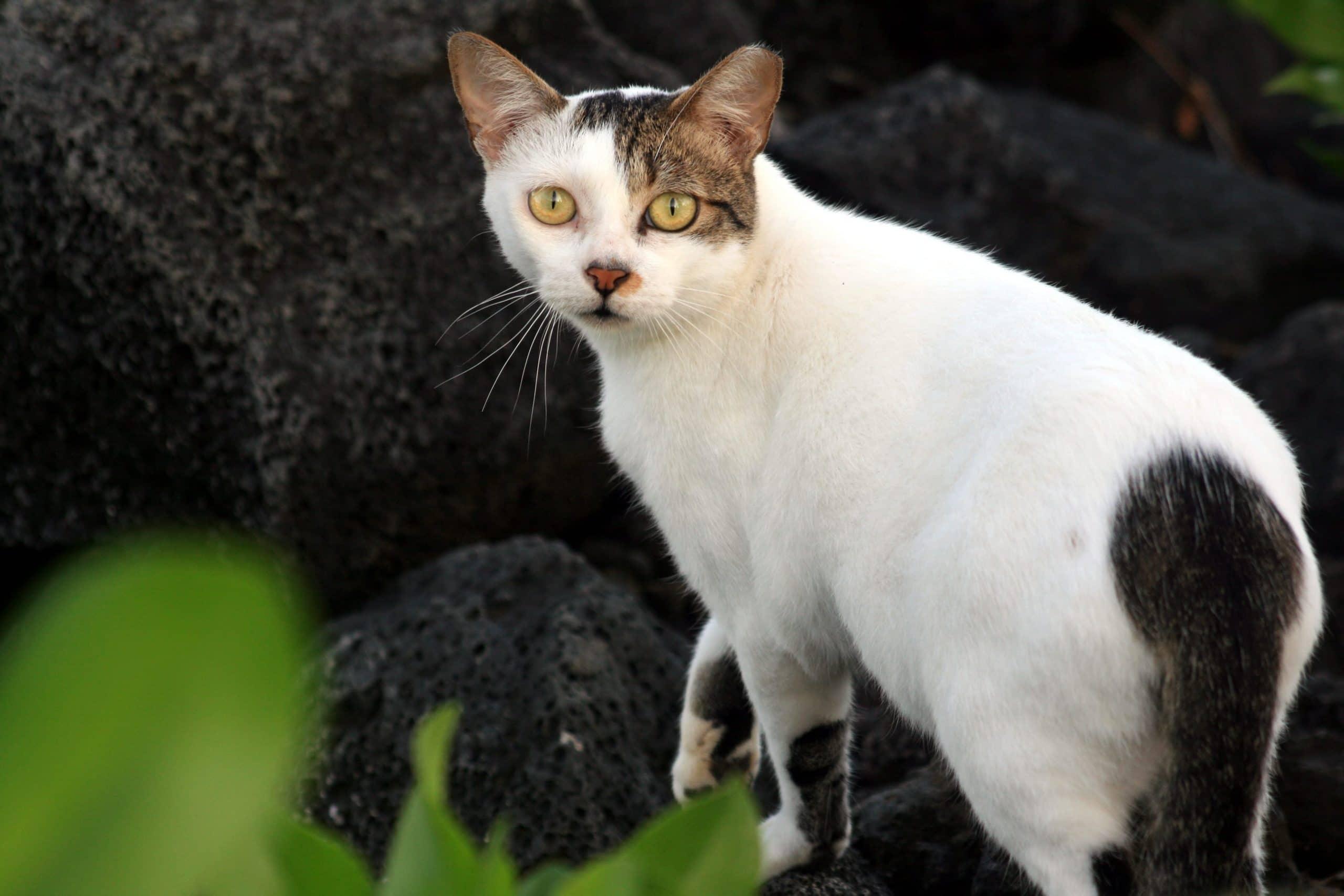 Los gatos ferales no se pueden tener en casa