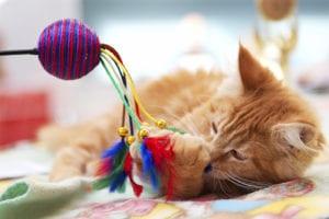 Gato jugando con un juguete