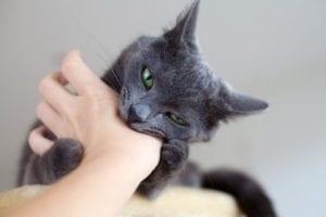 Gato mordiendo la mano de un humano