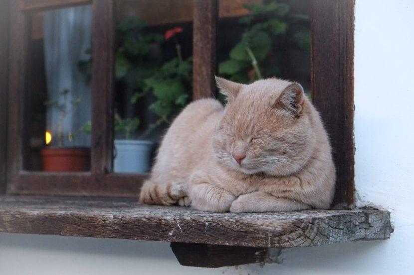 Gato naranja durmiendo