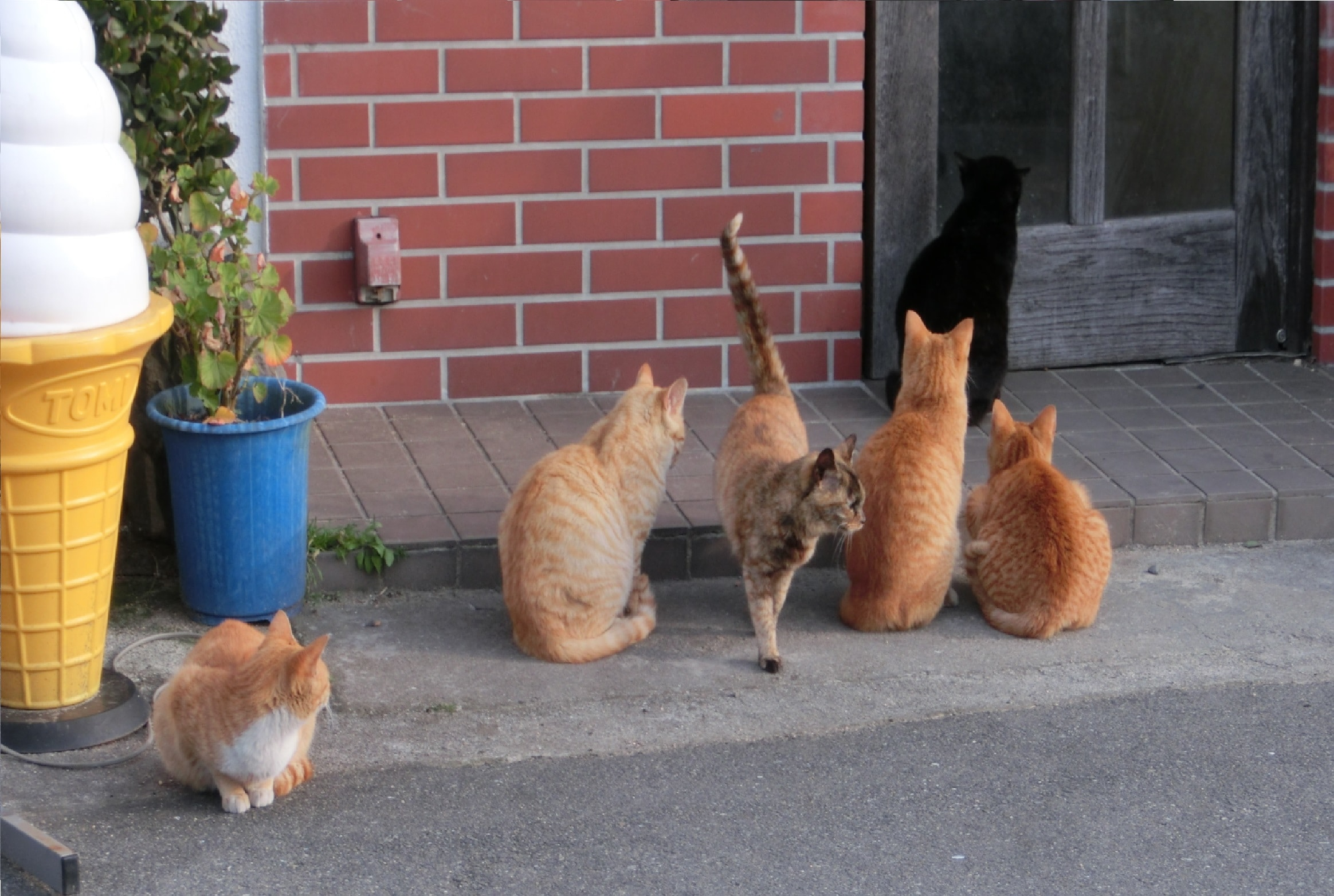 Los gatos quieren las puertas abiertas