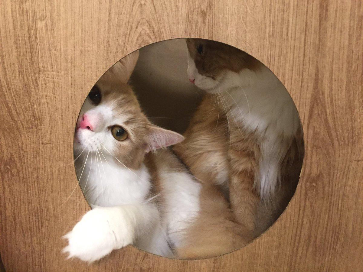 Vigila a tu gato