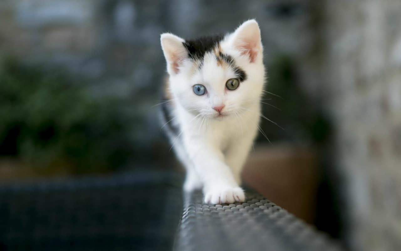 El color de ojos del gato bebé va cambiando