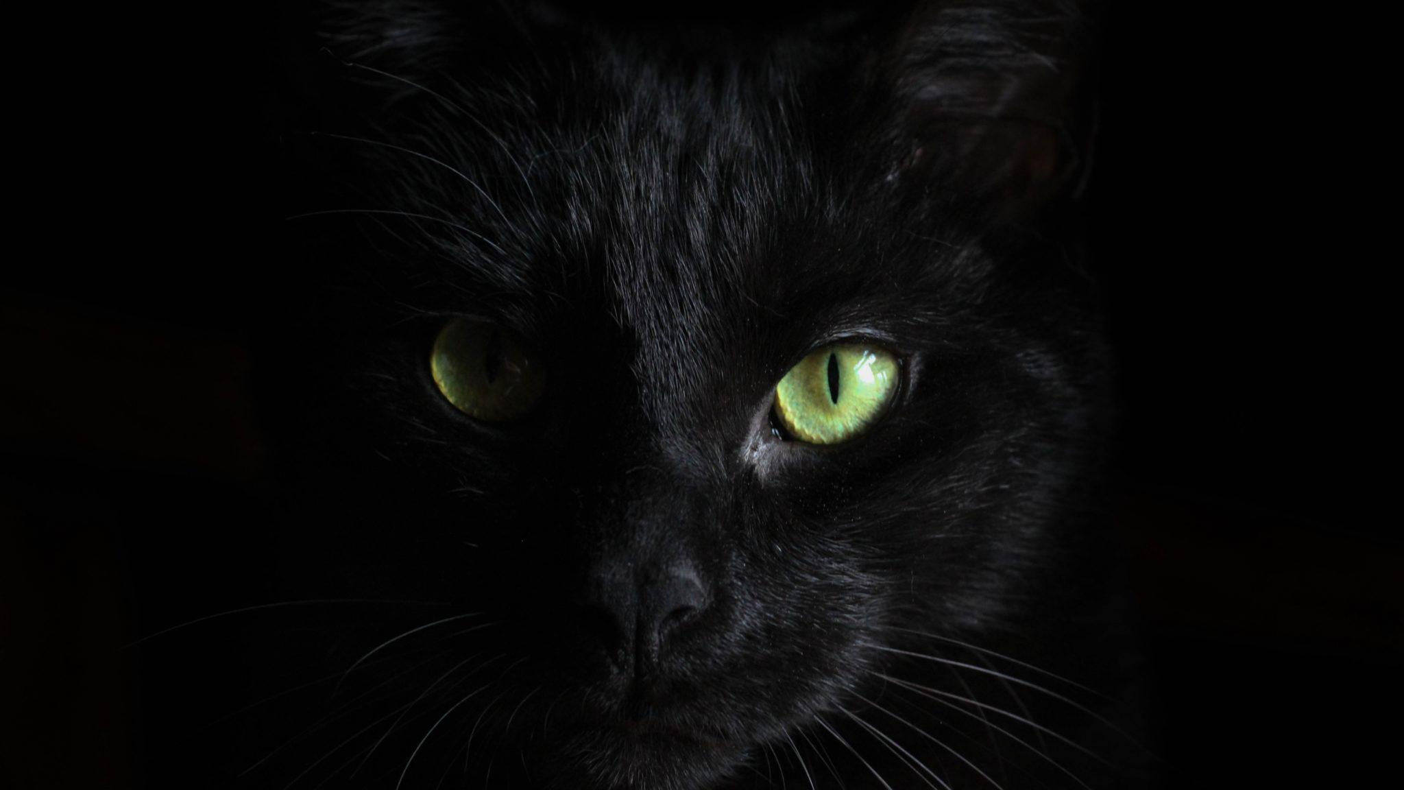 Los ojos de los gatos son delicados