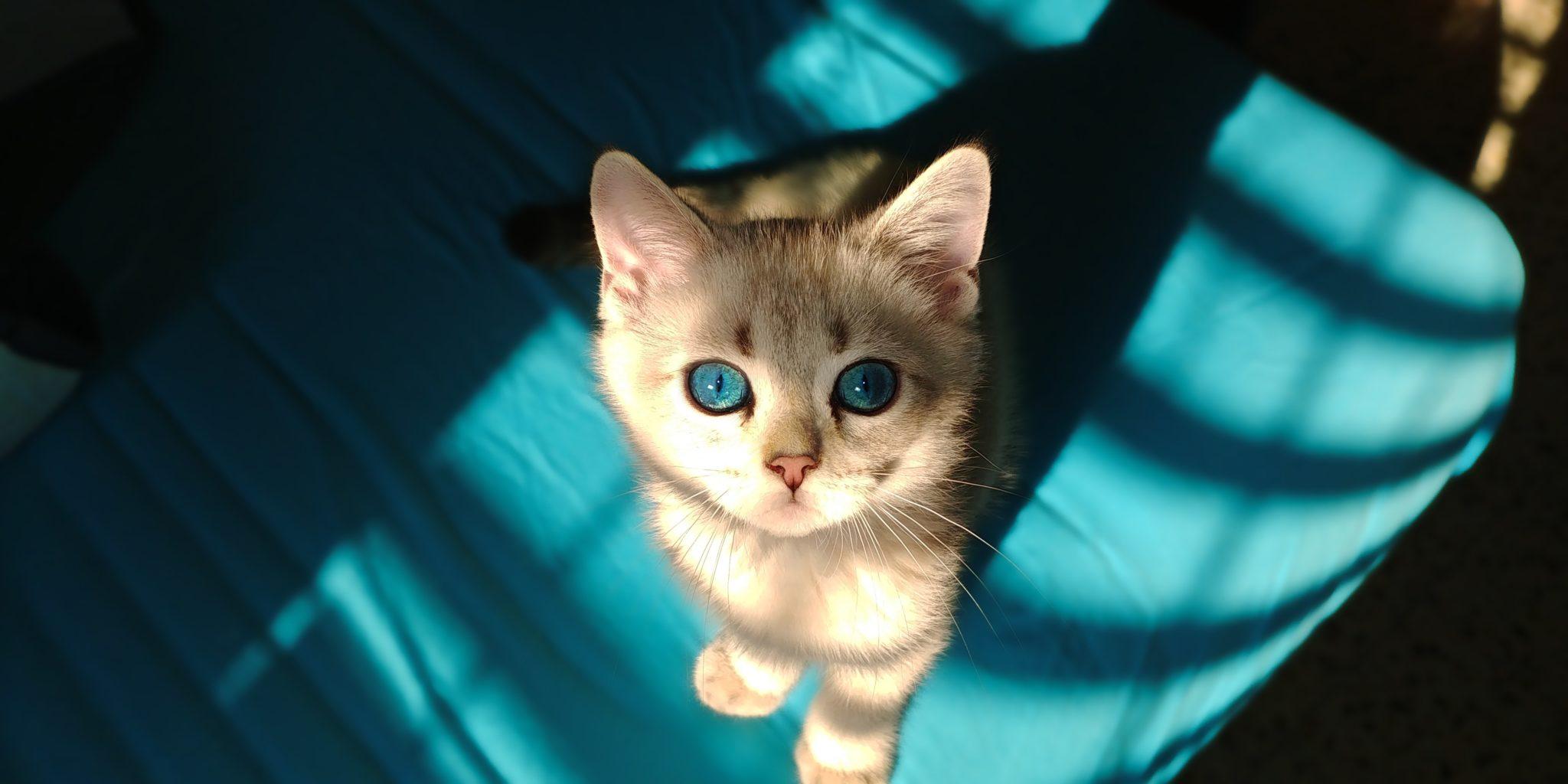 Los ojos de los gatos son preciosos