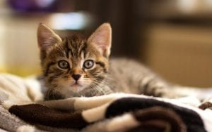 Gato tumbado encima de una manta
