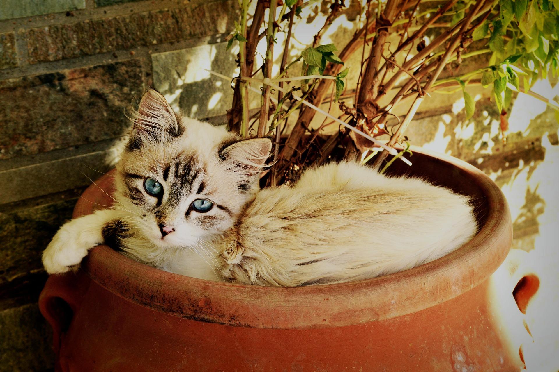 Los gatos crecen rápido