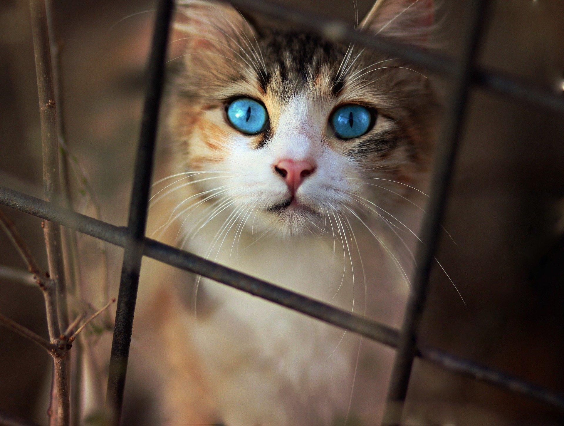 Si crees que el gato ha dejado de crecer drásticamente, llévalo al veterinario
