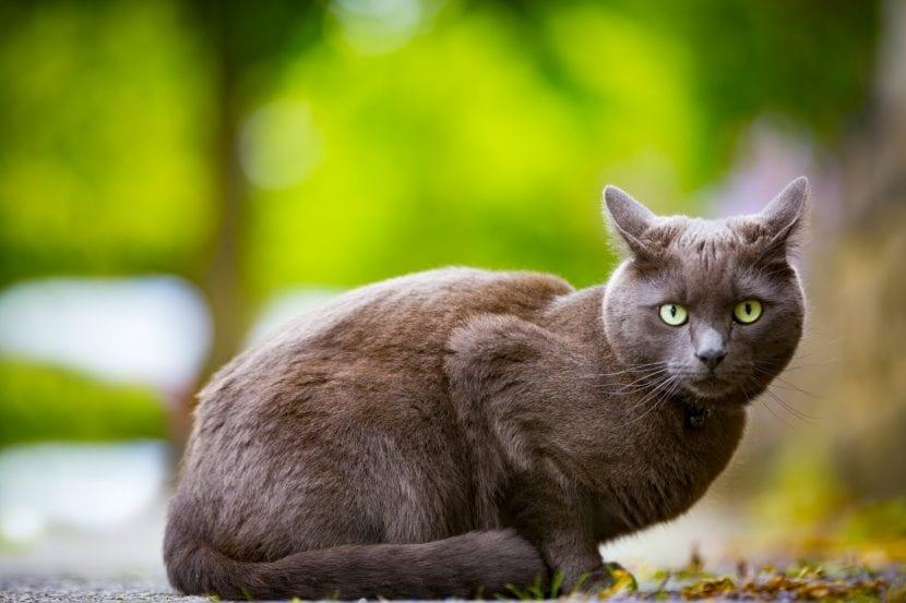 Gato adulto en el exterior