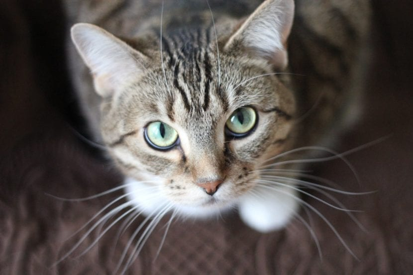 Los gatos olfatean mucho