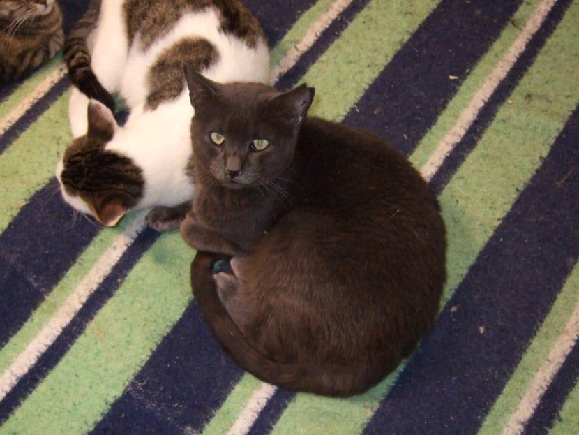 Gato con marca en la oreja