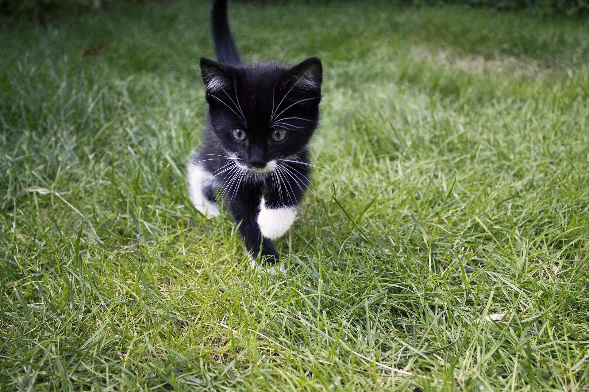 Los gatos crecen durante dos años