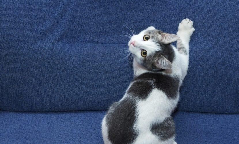 Gato marcando su territorio