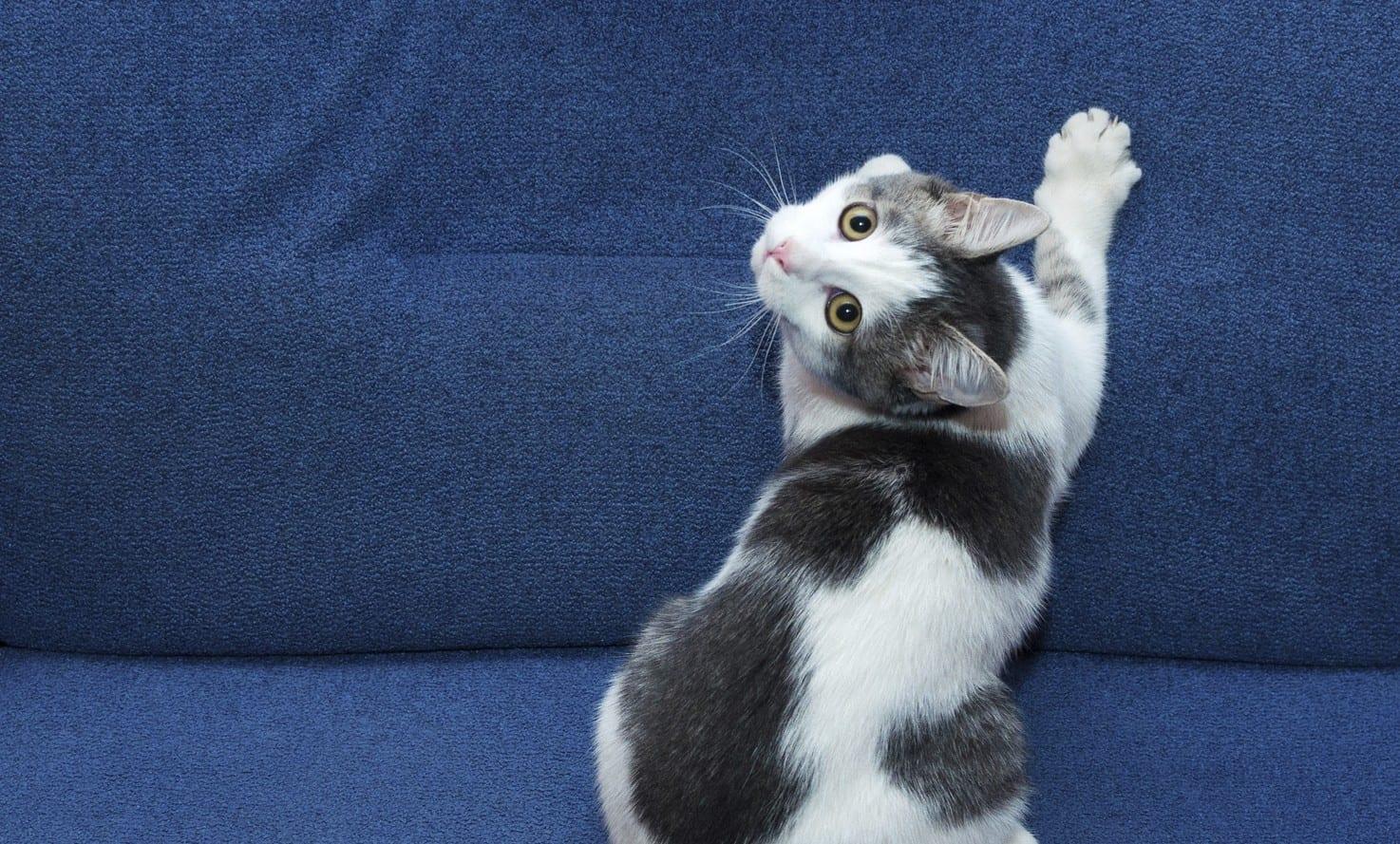 Resultado de imagen de gato marcando territorio