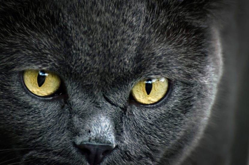 El sentido del olfato del gato está muy desarrollado