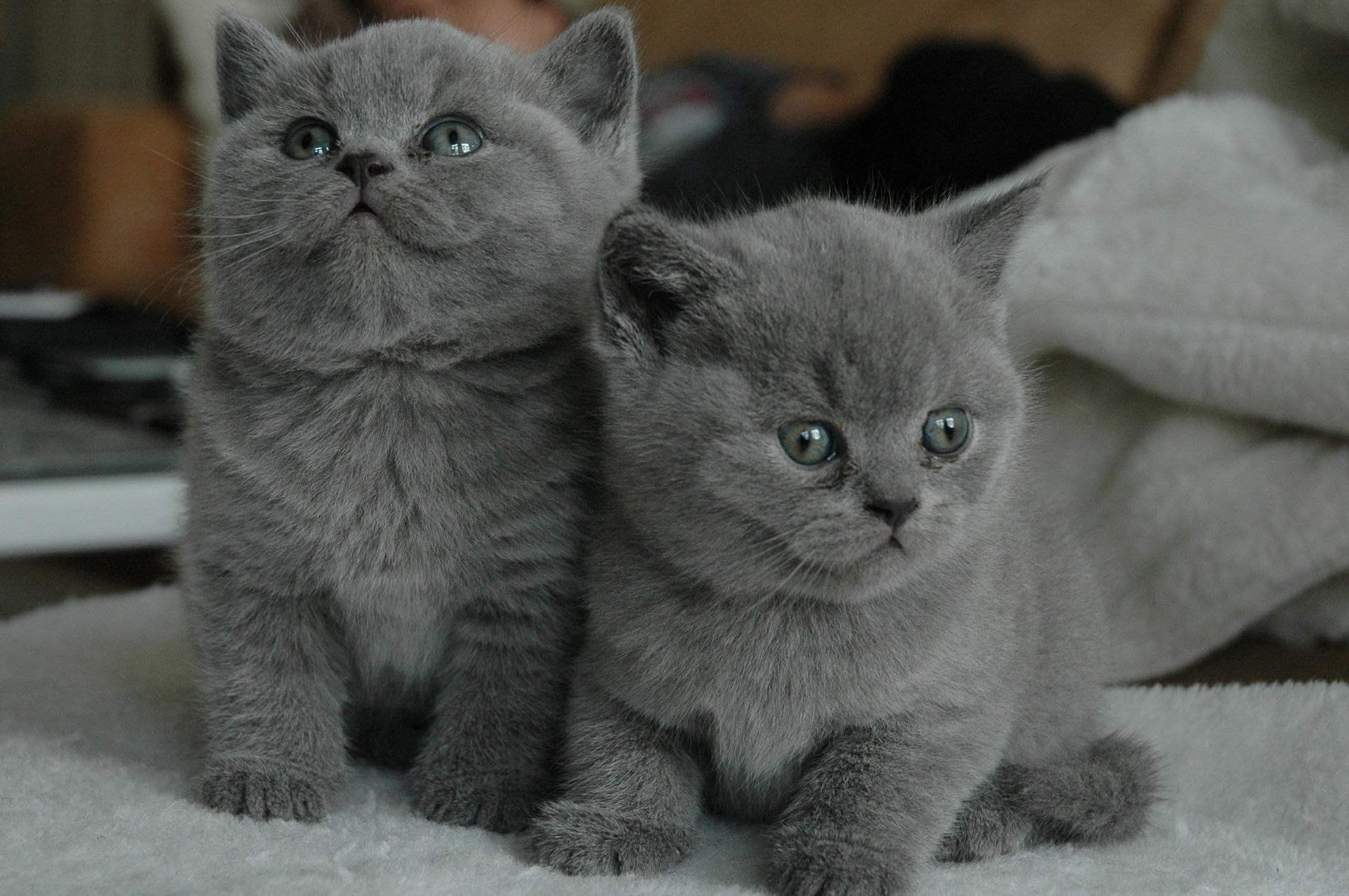 Los gatos jóvenes crecen muy rápido
