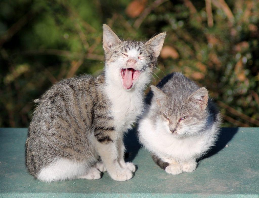 No es fácil desparasitar gatos callejeros