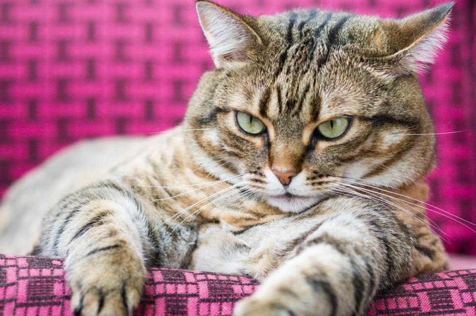 Por qu mi gato ha engordado mucho for Como saber si me afecta clausula suelo