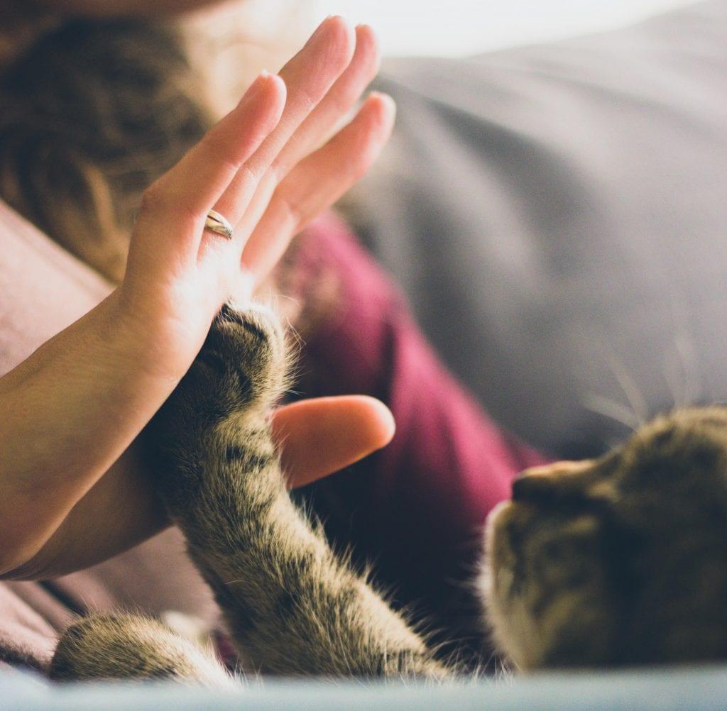 Trata a tu gato con respeto y cariño para que sea sociable