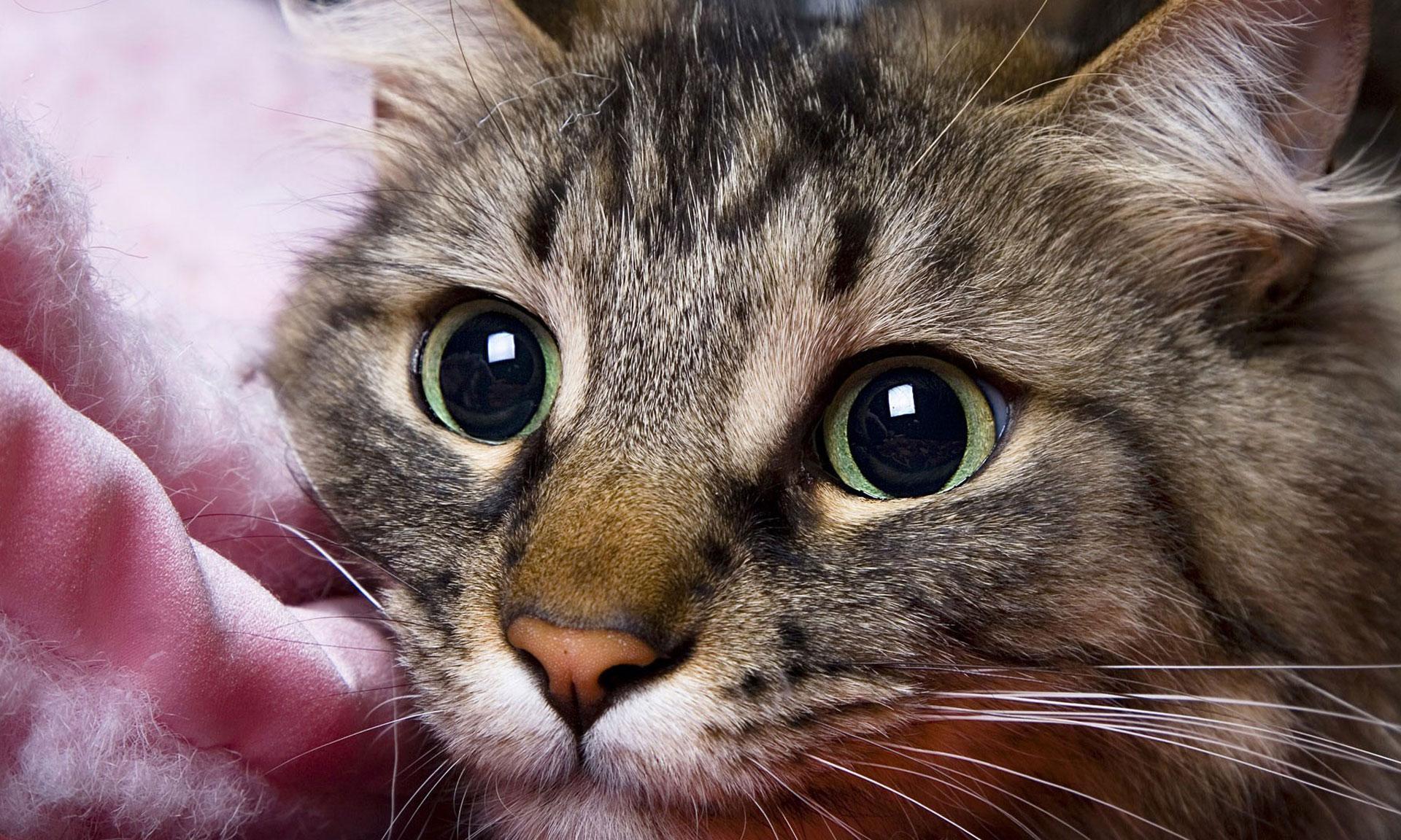 Los gatos se expresan de distintas formas