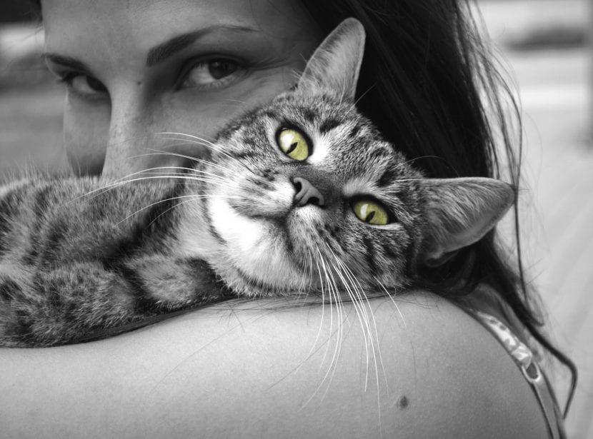 Gato querido