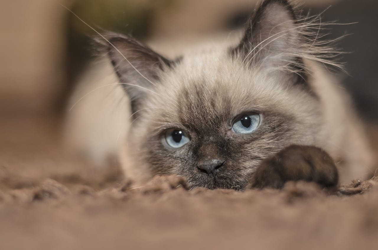 Gato travieso