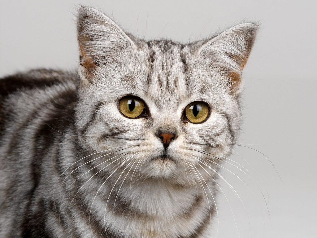 Ansiedad en gatos