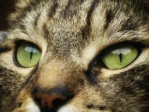 Cara de gato