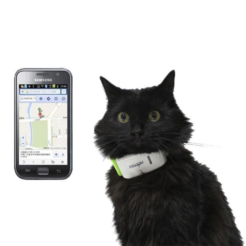el collar gps para gatos