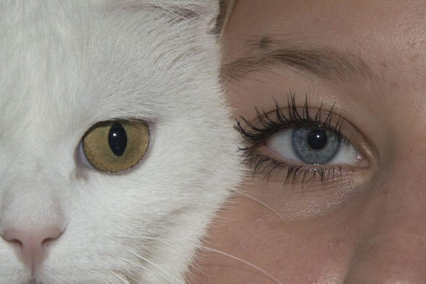 Los gatos pueden sentir cariño por los humanos