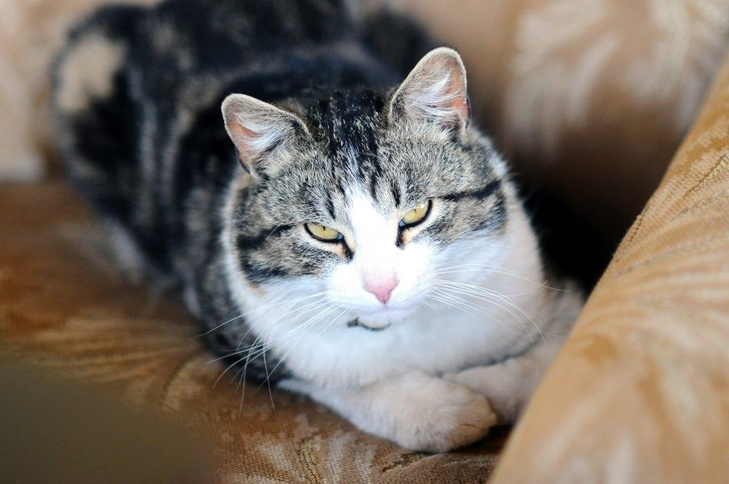 C mo elegir y mantener un sof si tienes gato - Como elegir sofa ...