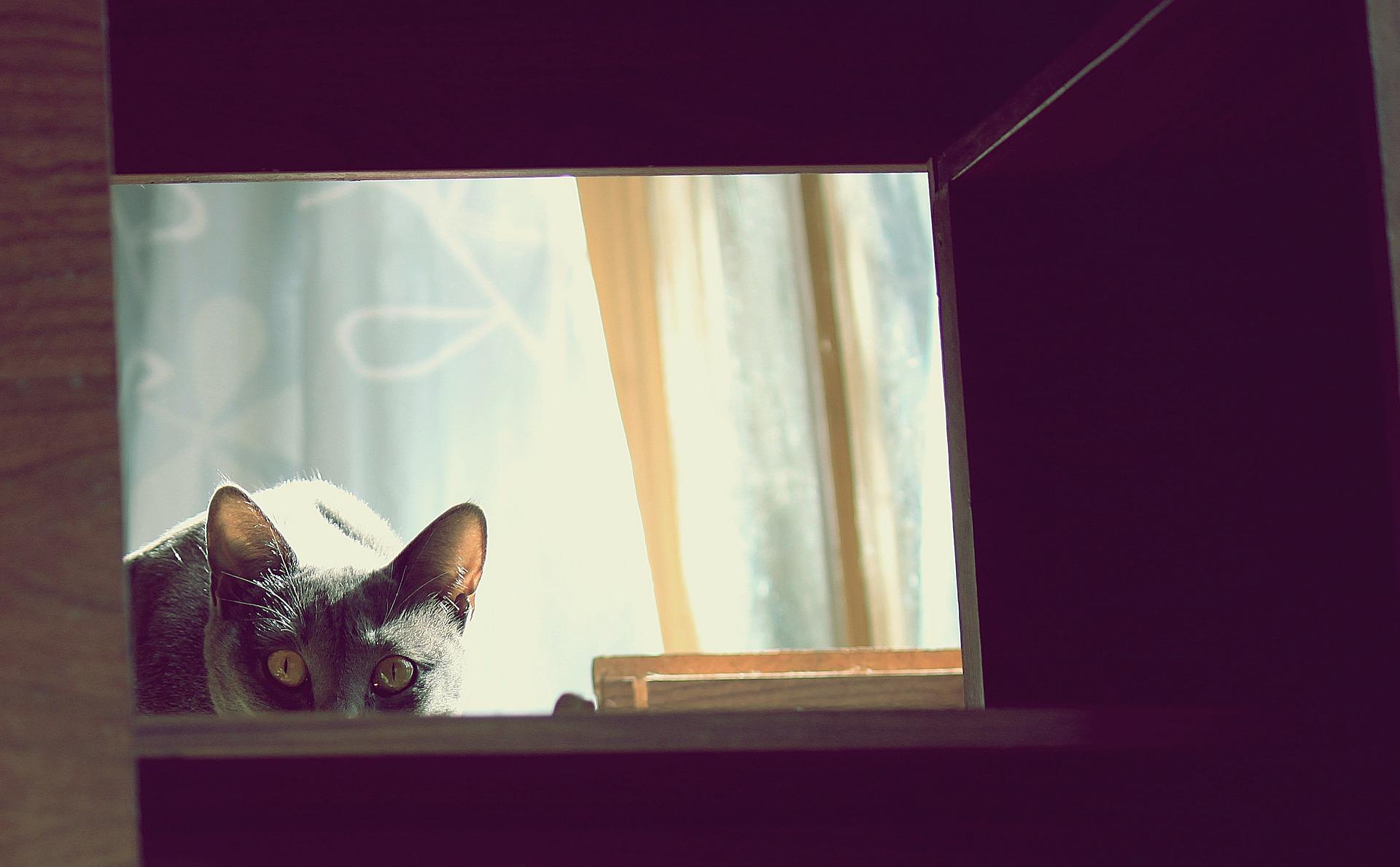 Los gatos pueden atacar si se sienten estresados
