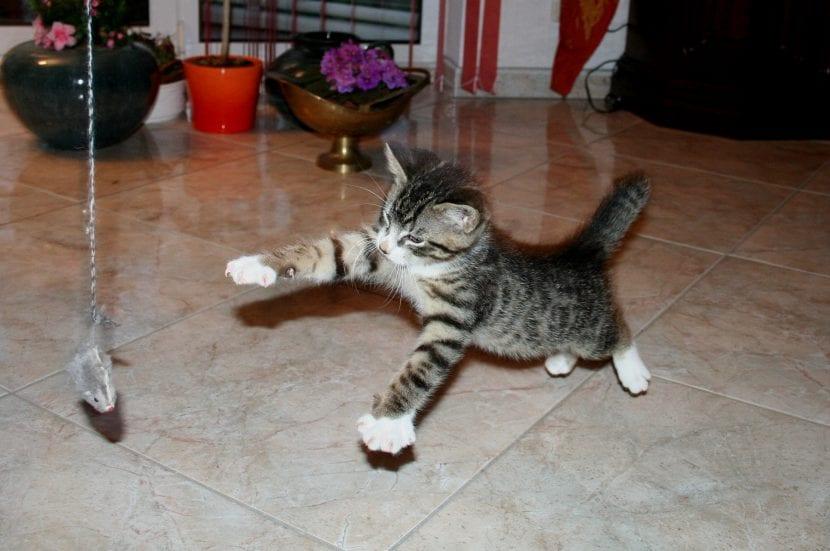 Jugar con el gato