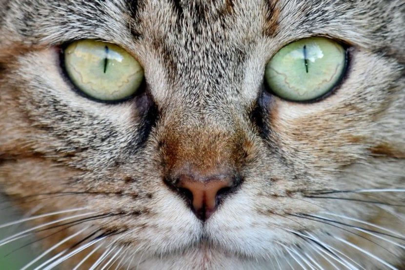 Los gatos pueden vivir unos 20 años