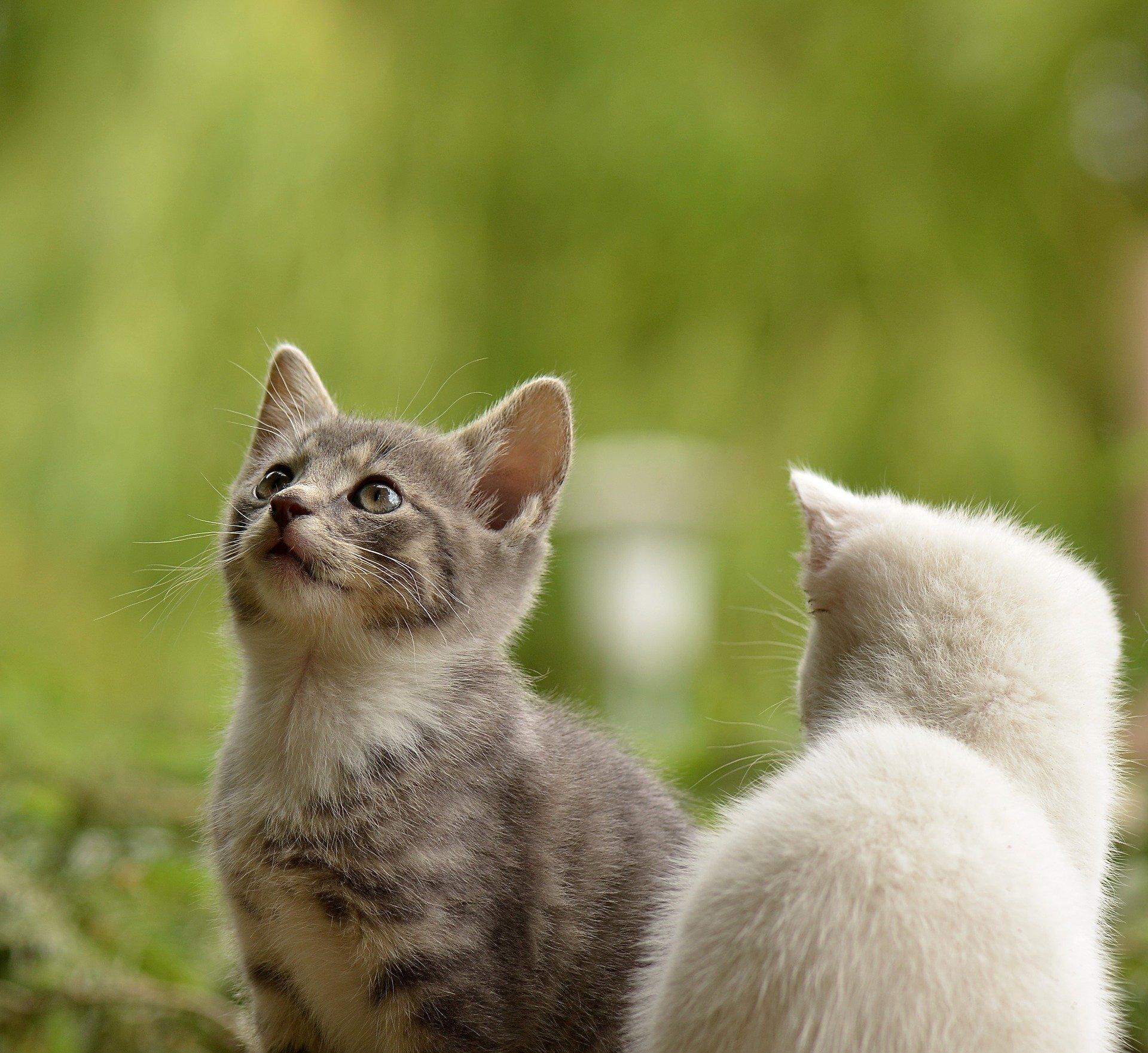 Los gatos jóvenes no deberían salir a la calle