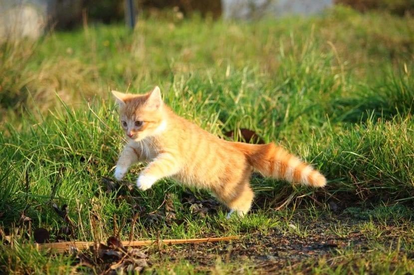 Gatito cazando