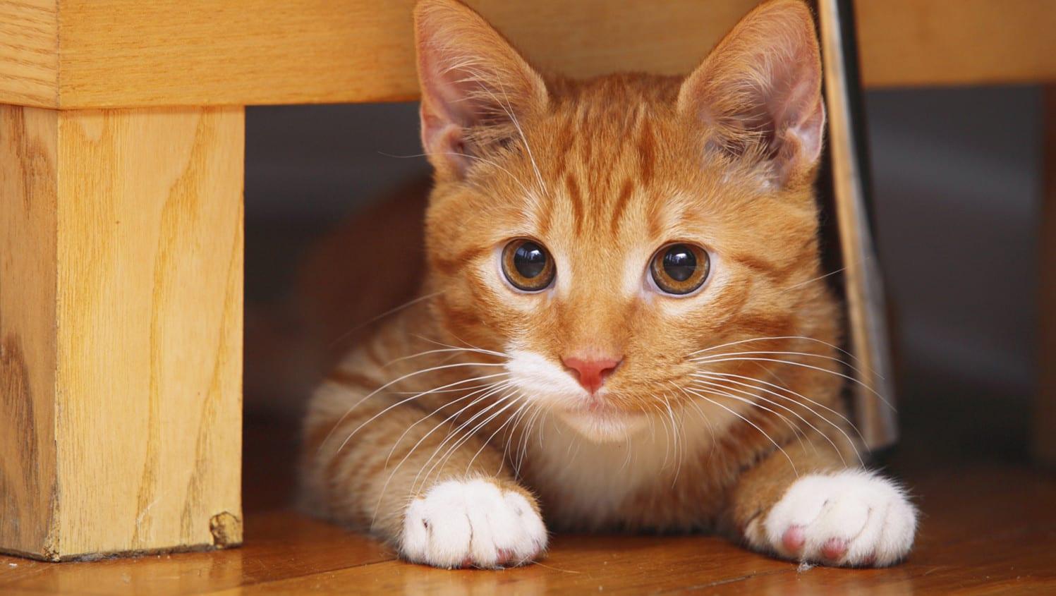 Gatito con miedo