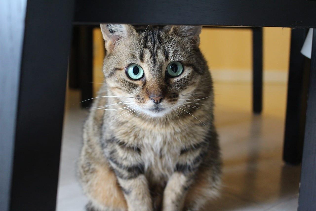 Cuidados de un gato adoptado - Cuidados gato 1 mes ...