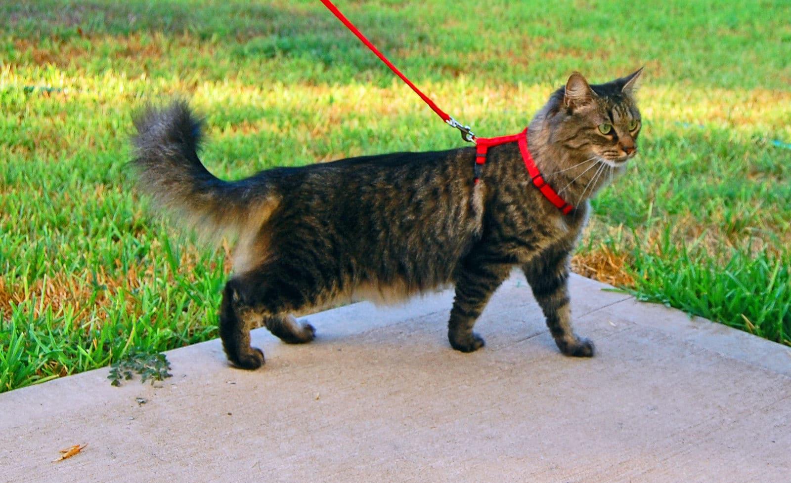 Saca a tu gato a pasear por zonas tranquilas