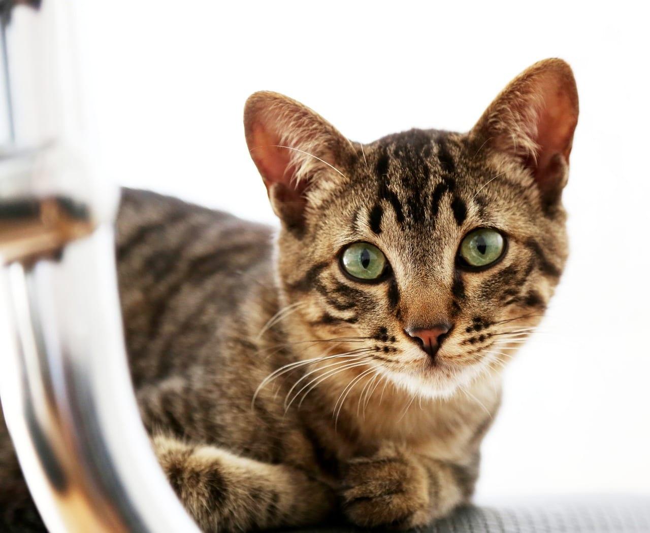Precioso gato en casa