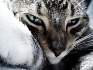 Gato mimoso