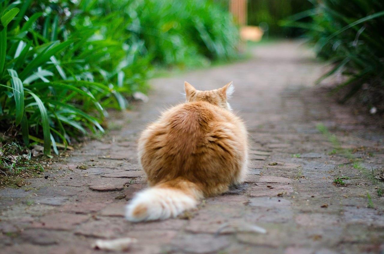 D nde buscar a mi gato - Como saber si tengo pulgas en casa ...
