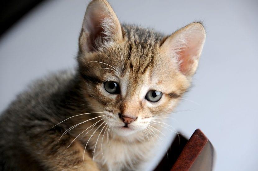 Gatito muy joven