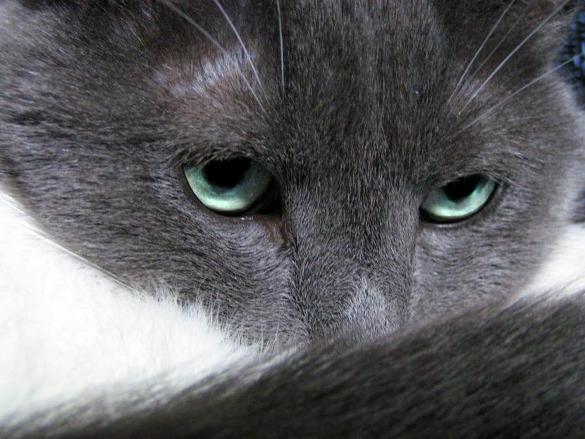 El gato es un depredador