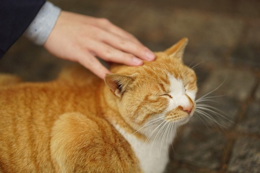 Gato atigrado naranja feliz