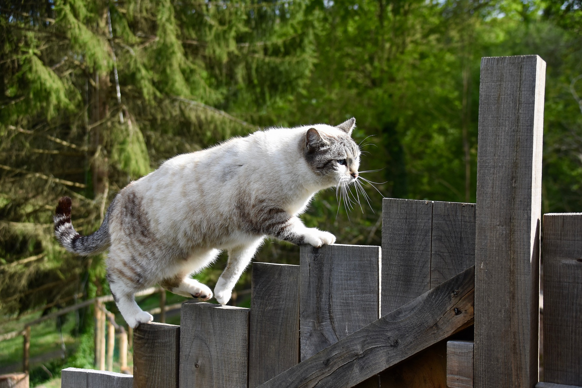 La esterilización en gatos es una operación rápida
