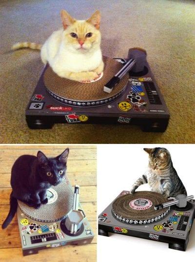 Gato jugando con un tocadiscos